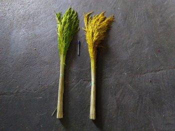 Flor De Arroz para Decoração c/ aprox. 20 hastes