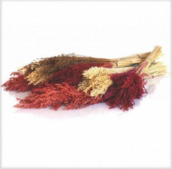 Flor de Vassoura para Decoração Mç. c/ Aprox. 6 a 8 hastes